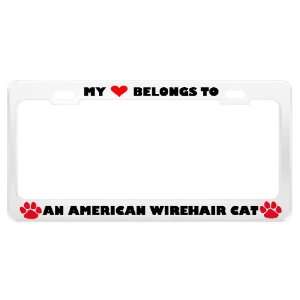An American Wirehair Cat Pet White Metal License Plate