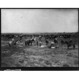 Branding Mavericks,branding cattle,Colorado/Utah?,c1905