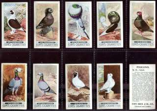 Tobacco Card Set, Cope, Racing PIGEON, Sport, Ring, Band, 1926