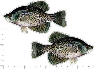 BLACK CRAPPIE   Fish Graphic Vinyl Truck Sticker Decal