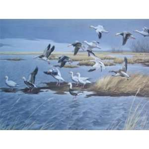 Maynard Reece   Snow Geese, Blue Geese Home & Kitchen