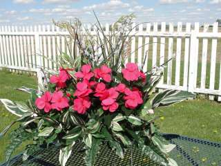 Green Plants Pink Impatiens Tombstone Saddle Flowers In Loving Memory