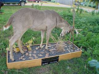 Full Body Whitetail Deer Mount Taxidermy Hunting Cabin Decor