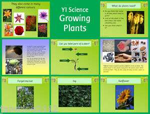 Science topic   GROWING PLANTS   Primary IWB Teaching resources