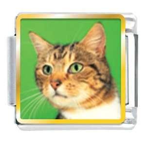Eyed Cat Animal Photo Italian Charms Bracelet Link Pugster Jewelry